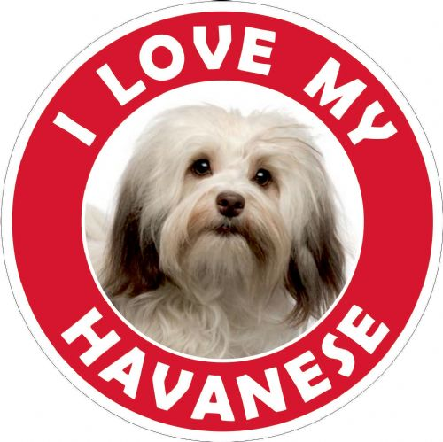 Havanese sticker